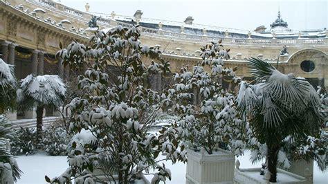 piante da veranda top piante da veranda tg34 pineglen
