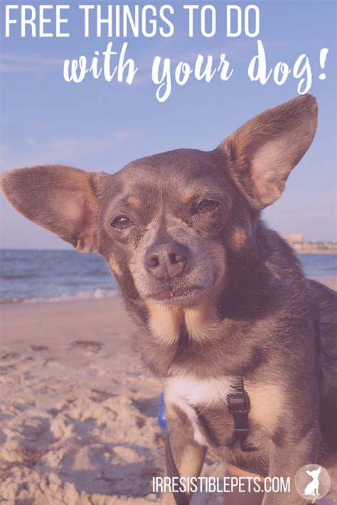 things to do with dogs 5 free things to do with your this summer irresistible pets