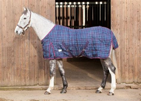 whitaker show rug loveson medium weight 200g stable rug equine mania