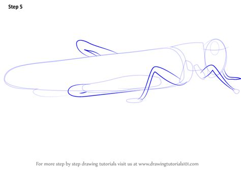 learn how to draw a locust insects step by step drawing tutorials