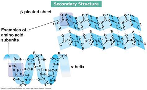 protein structure amino acids and proteins biochem rocks