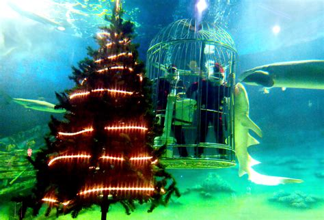 aquarium lights christmas tree using electric eels 171 cbs
