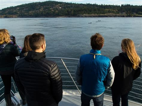 boat tours from seattle to san juan islands whale watching tours from seattle to the san juan islands