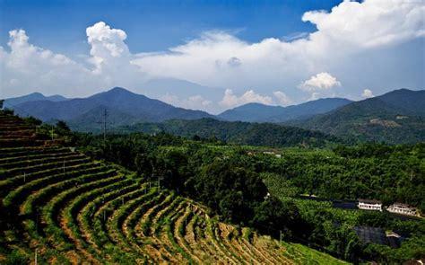 Coffee planting, Arabica & Jamaica Blue Mountain come to Fujian   What's On Xiamen