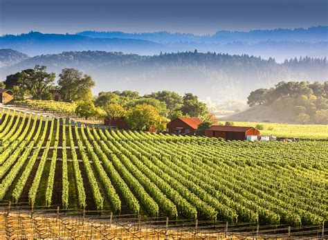 Photo Napa Valley by 5 Finds In Napa Valley Huffpost