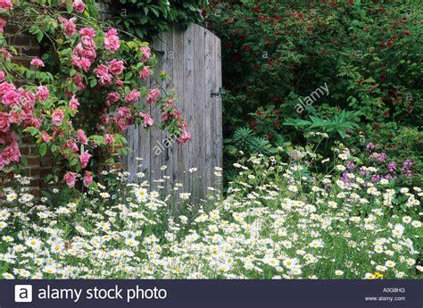garden gate rustic wooden climbing roses daisies elsing