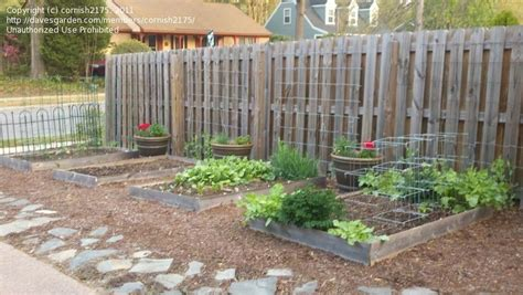 High Yield Gardening Cornish2175 Picture Raised Bed Fence Line Garden Ideas