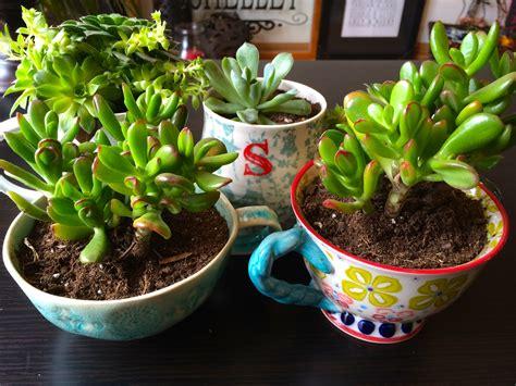 piante di interno piante grasse da appartamento piante appartamento