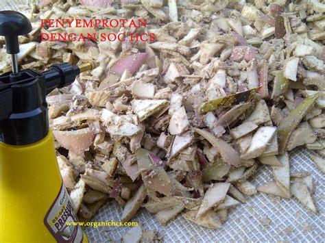 Fermentasi Pakan Ternak Kelinci cara ternak kelinci cara membuat pakan ternak fermentasi
