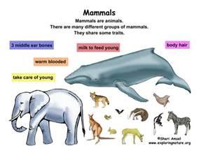 class mammals grade k 3