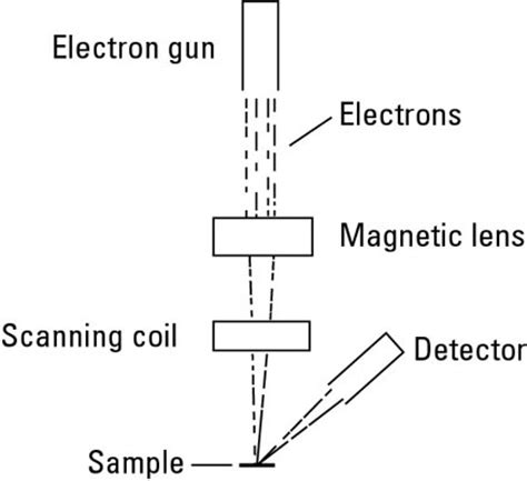 diagram of electron microscope see at the nano level with electron microscopy dummies