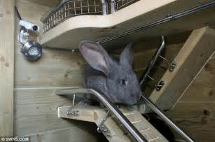 rabbit lives in a hutch most pered pets in the world two rabbits live in 163