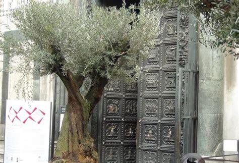 ulivi in giardino il giardino degli ulivi al duomo corrierefiorentino
