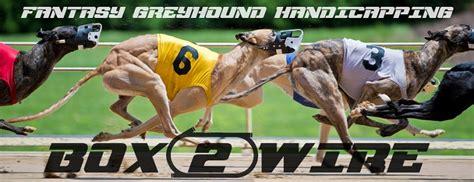 greyhoundnews greyhound racing today saturday june