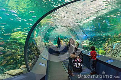 aquarium design toronto ripley s aquarium of canada editorial photo image 35729846