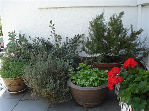 growing an herb garden in containers herbs in containers bonnie plants