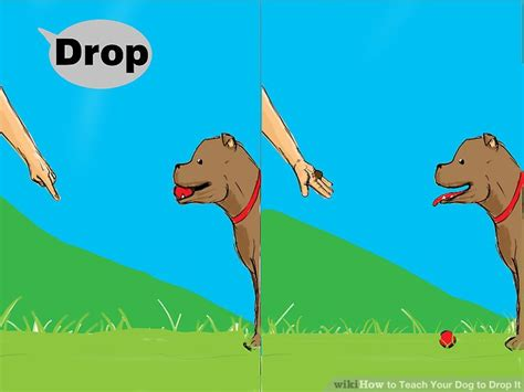 how to your to drop it how to teach your to drop it 11 steps with pictures