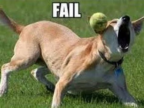puppy fails animals dogs fail compilation