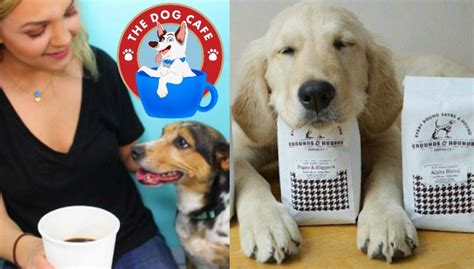 puppy cafe los angeles america s cafe golden woofs