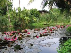 Lotus Pond Pictures The Lotus Pond The Guest House Picture Of Baan