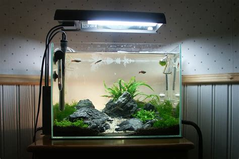 design aquascape mini how to set up simple aquascape with iwagumi style aquascaper