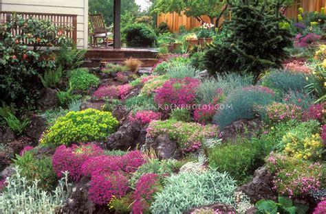 Rock Gardens On Slopes Planting A Hill Slope Garden Gorgeous Lush Rock Garden In Flower In On Slope Hillside