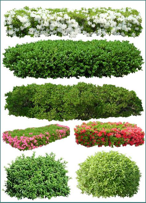 pattern photoshop vegetation 9 psd plant bushes images photoshop plants and shrubs