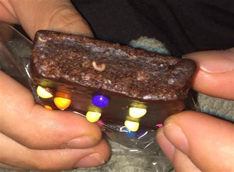 Worms In Food Pantry by Pantry Moth Worms Found In Cosmic Brownies Of