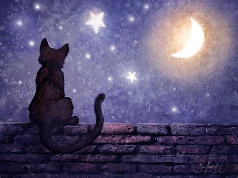 wallpaper cat night image gallery night cat