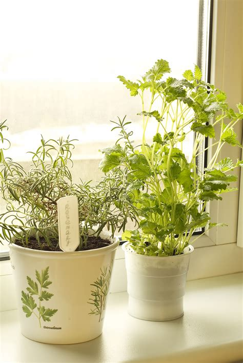 best plants to grow indoors best plants and herbs to grow indoors home farmer