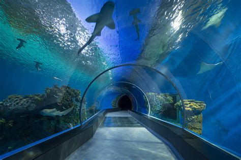 Aquarium Floor by Bespoke Floor Provided For The Blue Planet Architecture