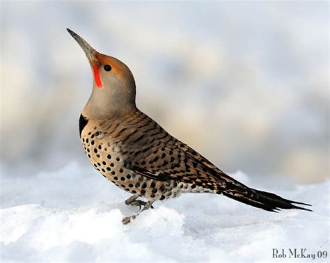 flicker birds and more birds pinterest