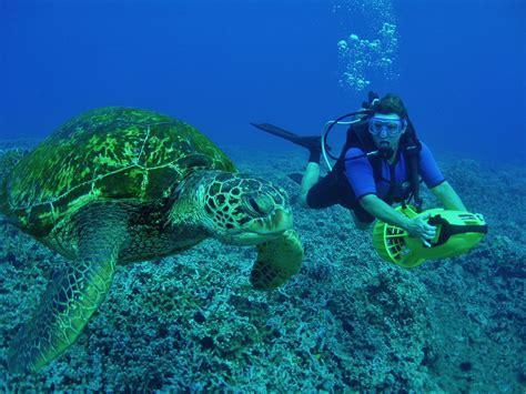 dive sea image gallery scuba turtle