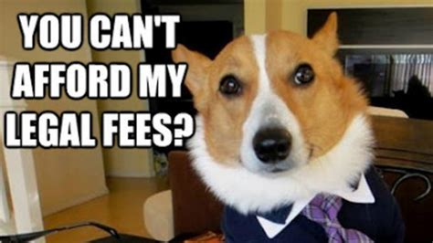 Corgi Meme - business corgi meme www imgkid com the image kid has it