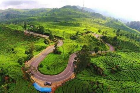 Teh Walini Bandung segarnya wisata di perkebunan teh rancabali ciwidey