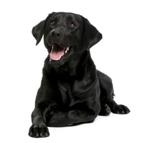 black names puppies black names