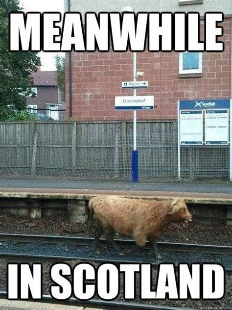 Scotland Meme - scottish things that make us laugh at craigend b b scottish humour animals love pinterest