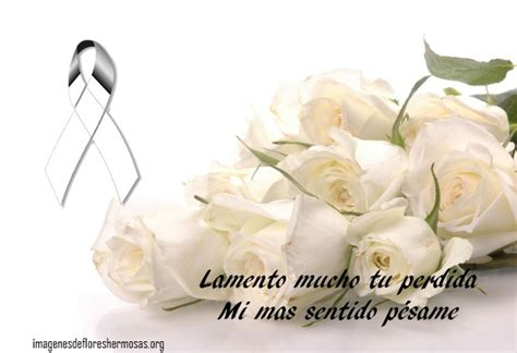 imagenes de rosas blancas con frases rosas blancas con frases de p 233 same flores hermosas
