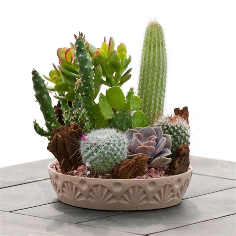 benefits  succulents cacti indoors giving plants