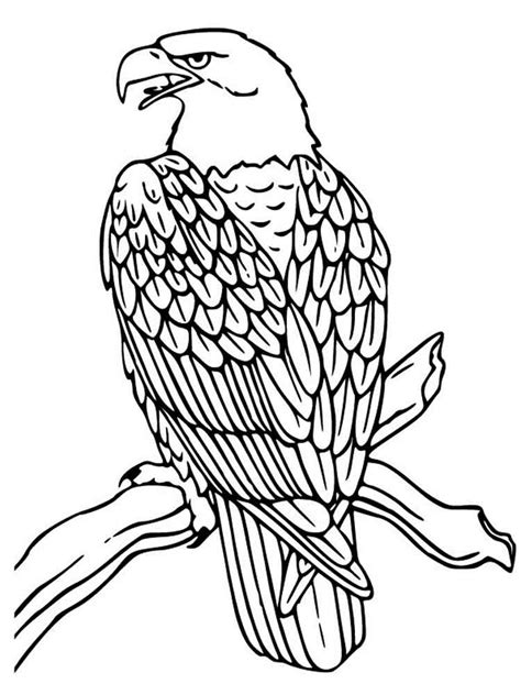 yellowhammer coloring page yellowhammer bird coloring page coloring coloring pages