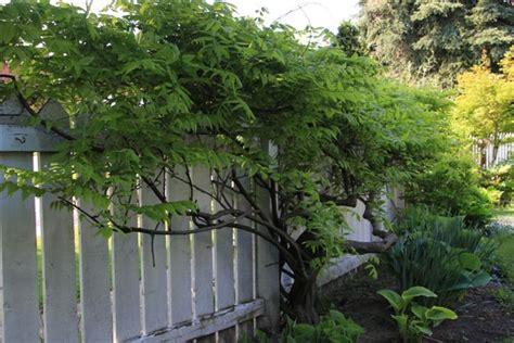 wisteria cynthia reyes