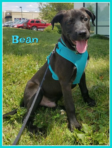 are beans for dogs bean safe rescue