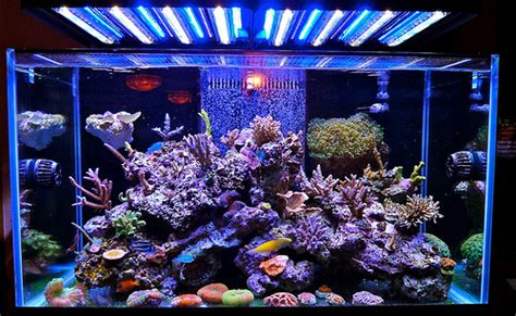 reef with lights stunning marine reef aquarium with ecoxotic led lighting