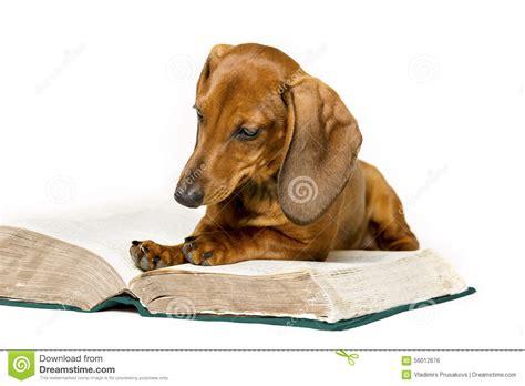 le chien a lu le livre 233 ducation d 233 cole animale lisant