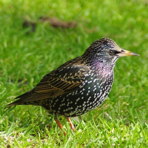 my first sterling bird pentax user photo gallery