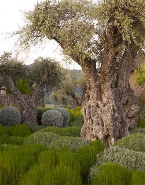 93 best mediterranean garden images on pinterest