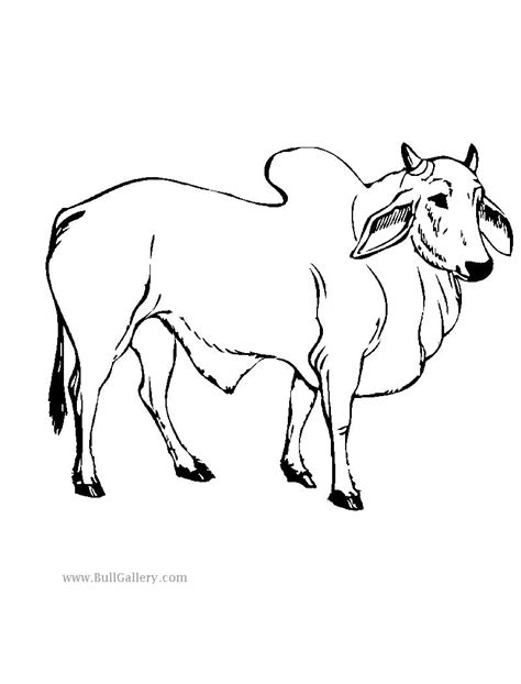 free coloring pages of bull skull