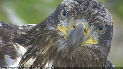 aef nefl eagles hope has a visitor 02 183 18 183 17 youtube