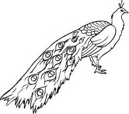peacock coloring page free printable peacock coloring pages for
