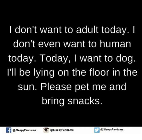 I Need An Adult Meme - funny pets memes of 2016 on sizzle 4chan